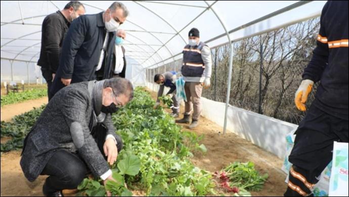 Belediyenin Kurduğu Seralarda Yetişen Sebzeler İhtiyaç Sahiplerine Ulaştırılıyor