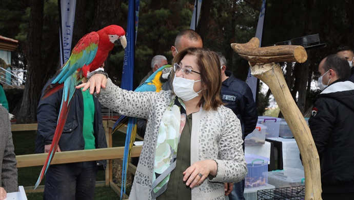 Büyükşehir, 4 Nisan Sokak Hayvanları Koruma Günü'nde Farkındalık Oluşturdu