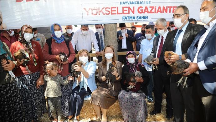Büyükşehir, Bölge İçin Uyumlu 70 Bin Tavuğu Kadın Hayvan Yetiştiricilerine Dağıttı