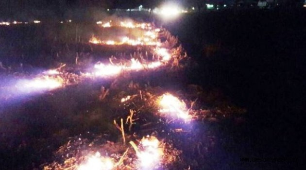 Ceylanpınar'da anız yangını 50 dönümlük araziyi küle çevirdi