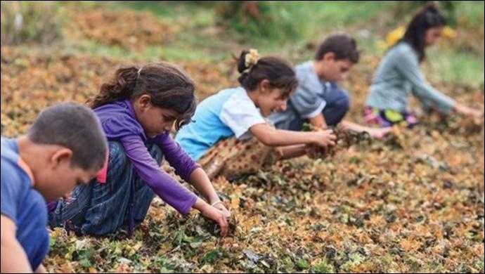 CHP'li Tanal'dan 'Mevsimlik Tarımdaki Çocuklar Okuldan Kopmasın' Teklifi