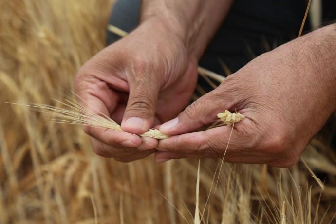 Çiftçiler Derneği: Kuraklık izleme heyeti oluşturulmalı