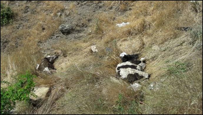 Çöp sahasına giren hayvanlar ölüyor!