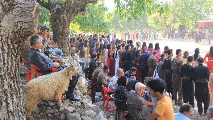Düğün dernek her yere keçisiyle gidiyor