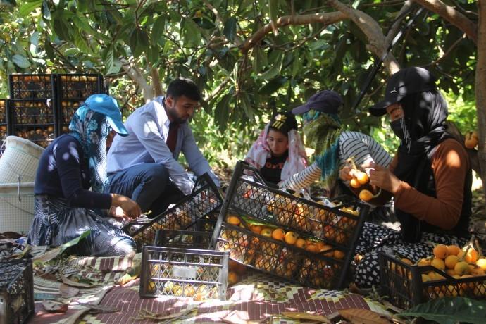 Eve kapanamayan tarım işçileri: Canımızın kıymeti yok