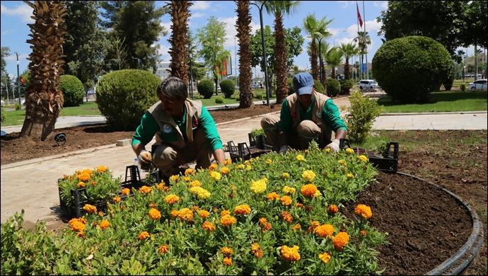 Haliliye'de parklar yaza hazır-(VİDEO)