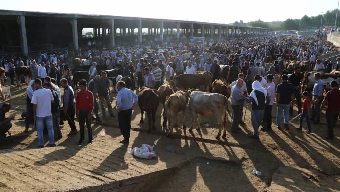 Hayvan pazarında bayram sevinci kalmadı