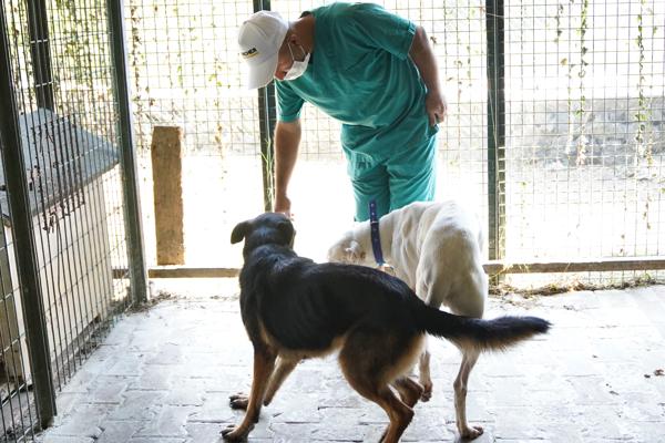 Hayvanları Koruma Haftası'nda patili dostlarımızın yaşam alanları Karcher'le sağlıklı ve tertemiz