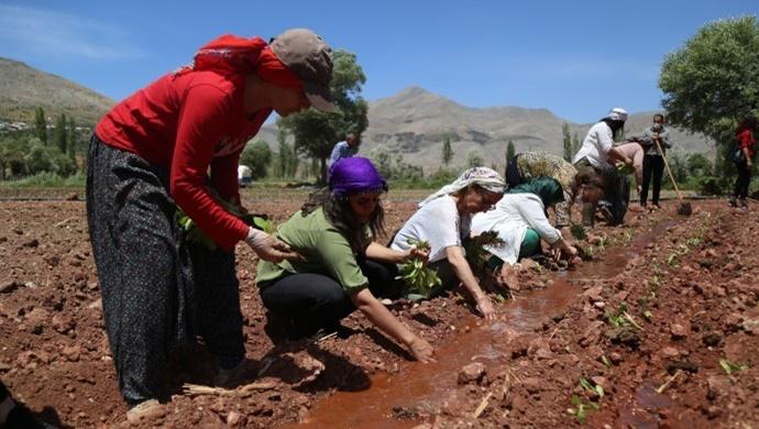 HDP'li kadınlar tütün emekçileriyle buluştu