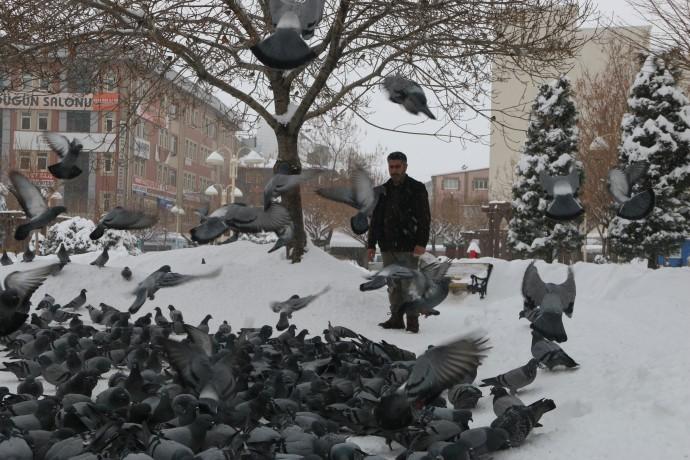 Her sabah ilk iş güvercinleri yemliyor