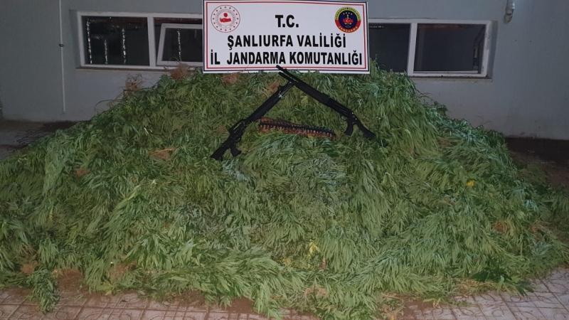 Jandarma'dan Uyuşturucu Operasyonu:3 Gözaltı