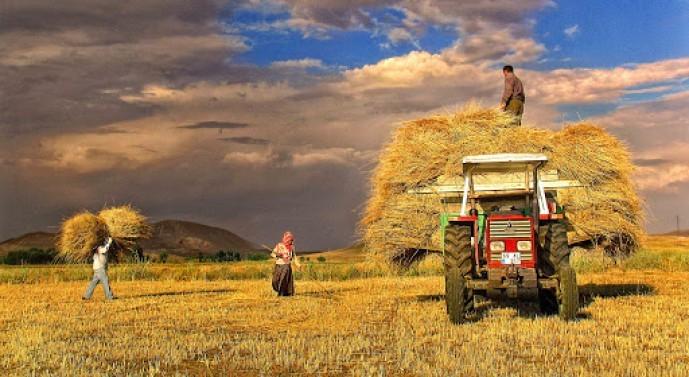 Karadeniz çiftçisi üretimi bırakıyor
