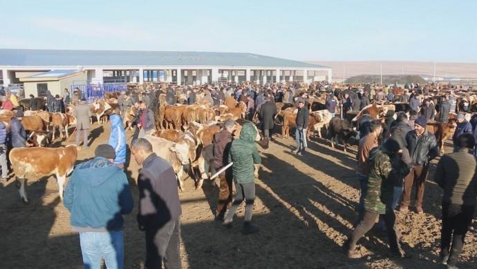 Kars hayvan pazarı salgın nedeniyle kapatıldı