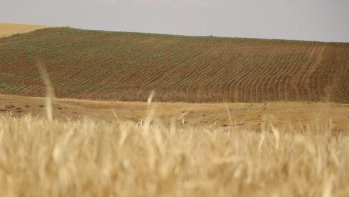'Kuraklık ciddi, çiftçilere destek verilmeli'