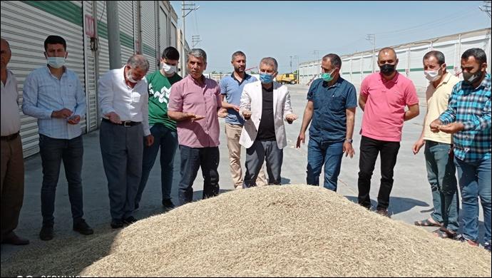 Mardin'de ilk arpa hasadı yapıldı