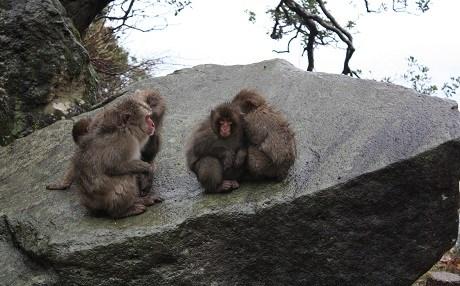 Maymun Işadamını öldürdü