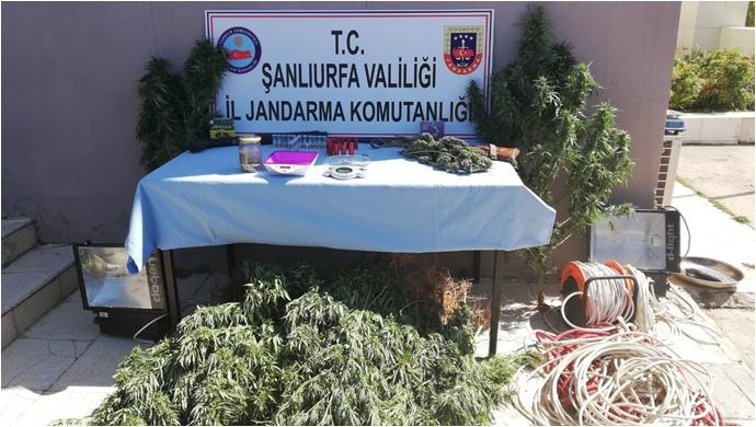 Şanlıurfa'da Jandarma Uyuşturucuya 'dur' dedi