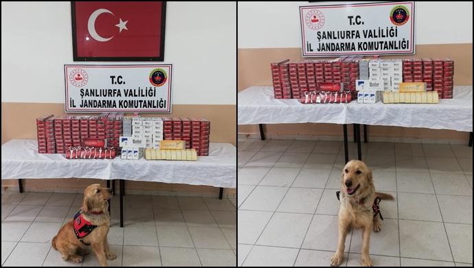 Şanlıurfa'da Kaçak Sigara Operasyonu-(Video)