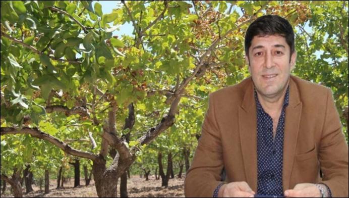 Şanlıurfa'da Kuraklık fıstık yetiştiricilerini vurdu