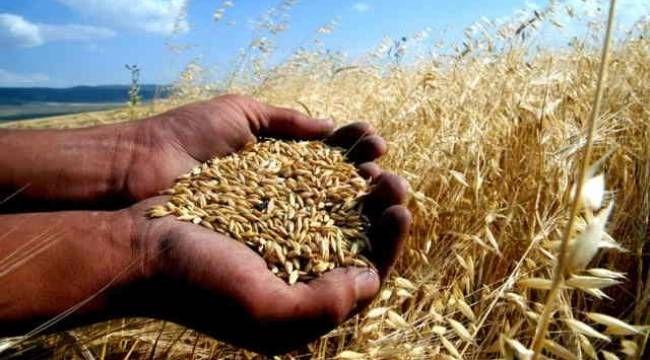 Şanlıurfalı çiftçiler dikkat! Mercimek ve buğday alım fiyatı açıklandı