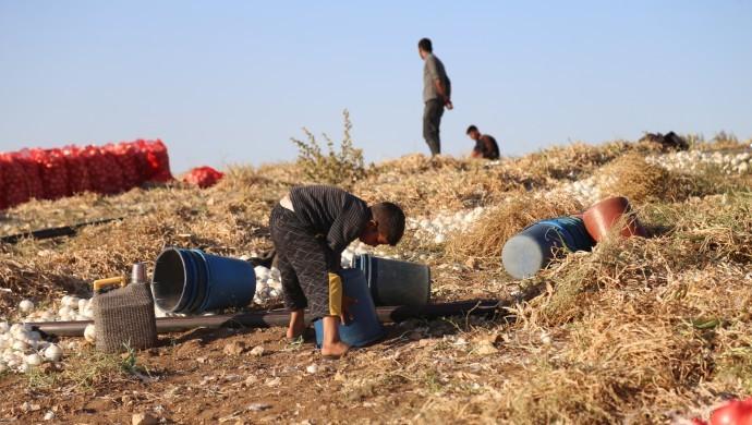 Şanlıurfalı Mevsimlik tarım işçilerinin çocukları 2 ay daha eğitimden uzak kalacak