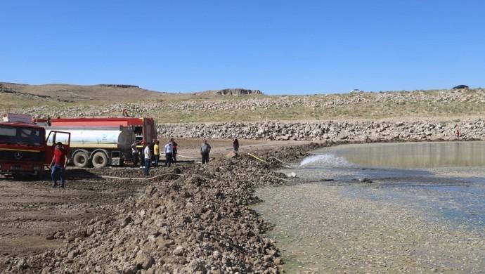 Sulama göletinde toplu balık ölümü