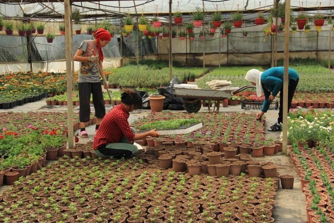 Süs bitkilerine pandemi etkisi: Yüzde 200 zam