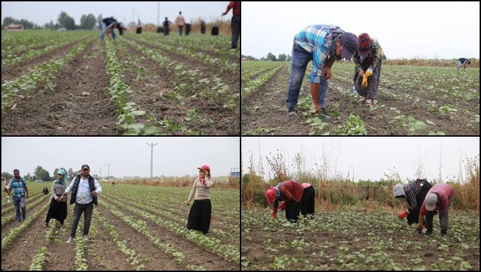Tarım işçileri: Aldığımız yevmiye yetmiyor