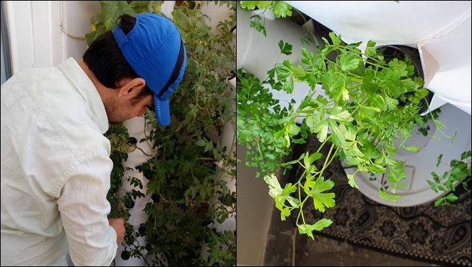 Türk ve Suriyeli ailelerin evlerinde bir metrekare dolusu taze sebze