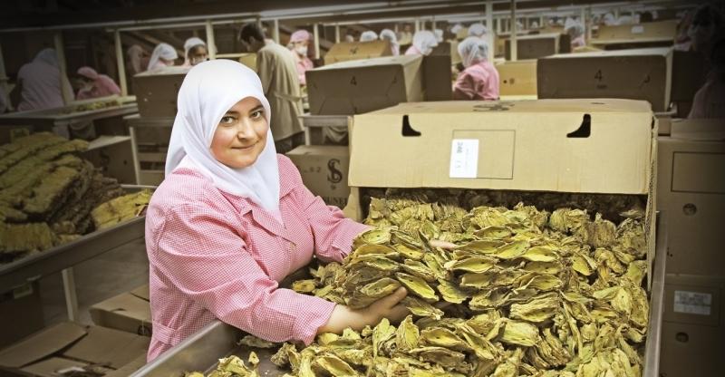 Tütün sektöründe tek tip paket ve kapalı dolap krizi