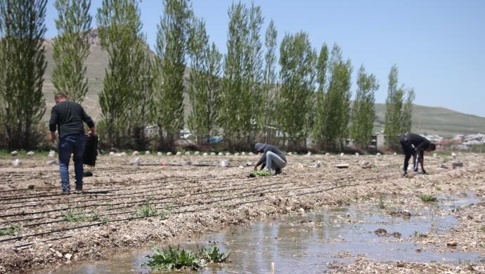 Üreten bir toplum için organik tarım