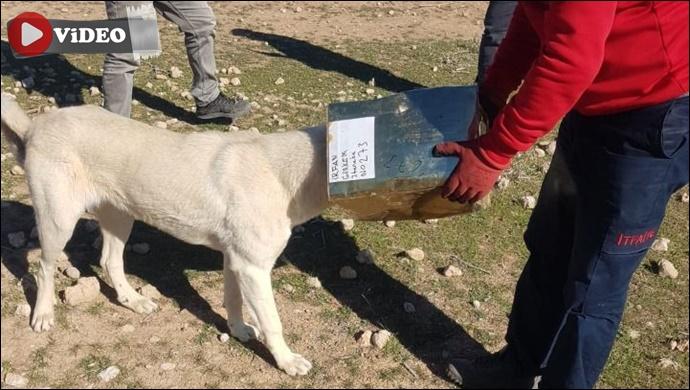 Urfa'da başına teneke sıkışan köpek kurtarıldı