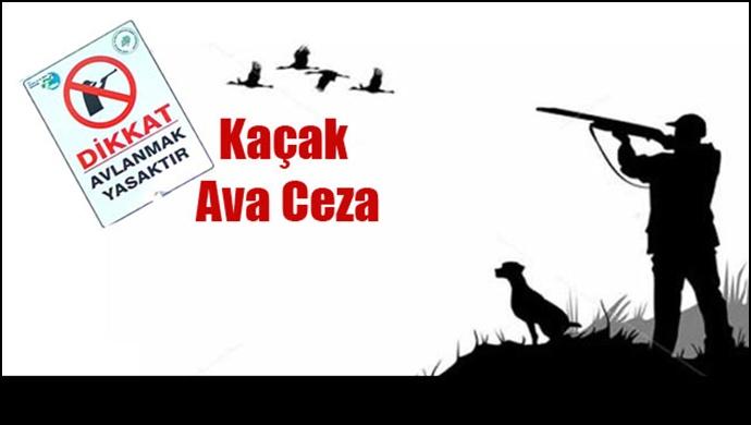 Urfa'da kaçak avcılara geçit yok!
